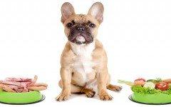 animales-omnivoros-animales-carnivoros-cientificos-dieta-correcta-perros