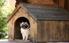 Building the best dog house for your puppy