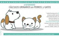 calculos-sistema-urinario-perros-gatos-veterinario