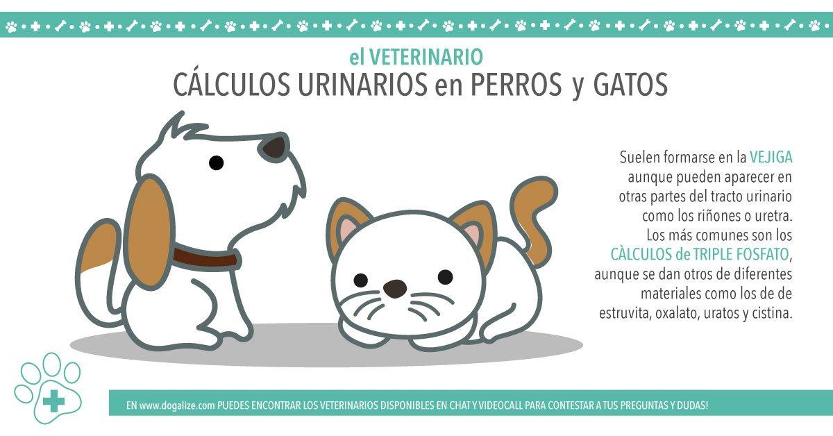 Cálculos en el sistema urinario en Perros y Gatos - Dogalize
