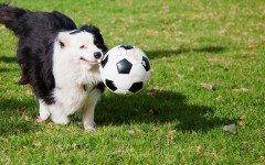 area caniI cani e le aree attrezzate: le regole da sapere per una buona convivenza tra pelosi