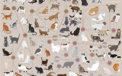 razze di gatto razze di gatti gatto