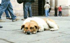 como-atender-a-un-perro-atropellado-cuidados-basicos