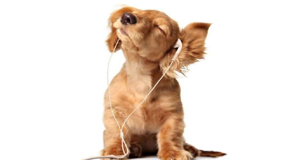 concierto-gilberto-santa-rosa-denny-rivera-perros-fundacion-perros