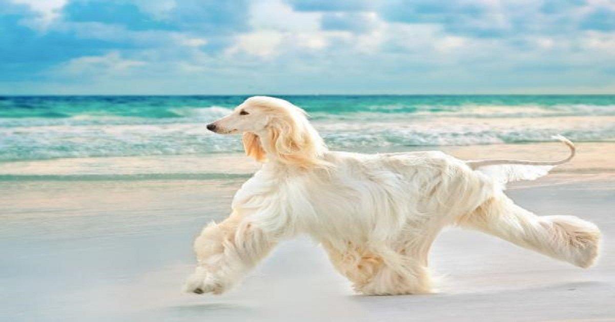 Recomendaciones para cuidar el pelo de tu perro