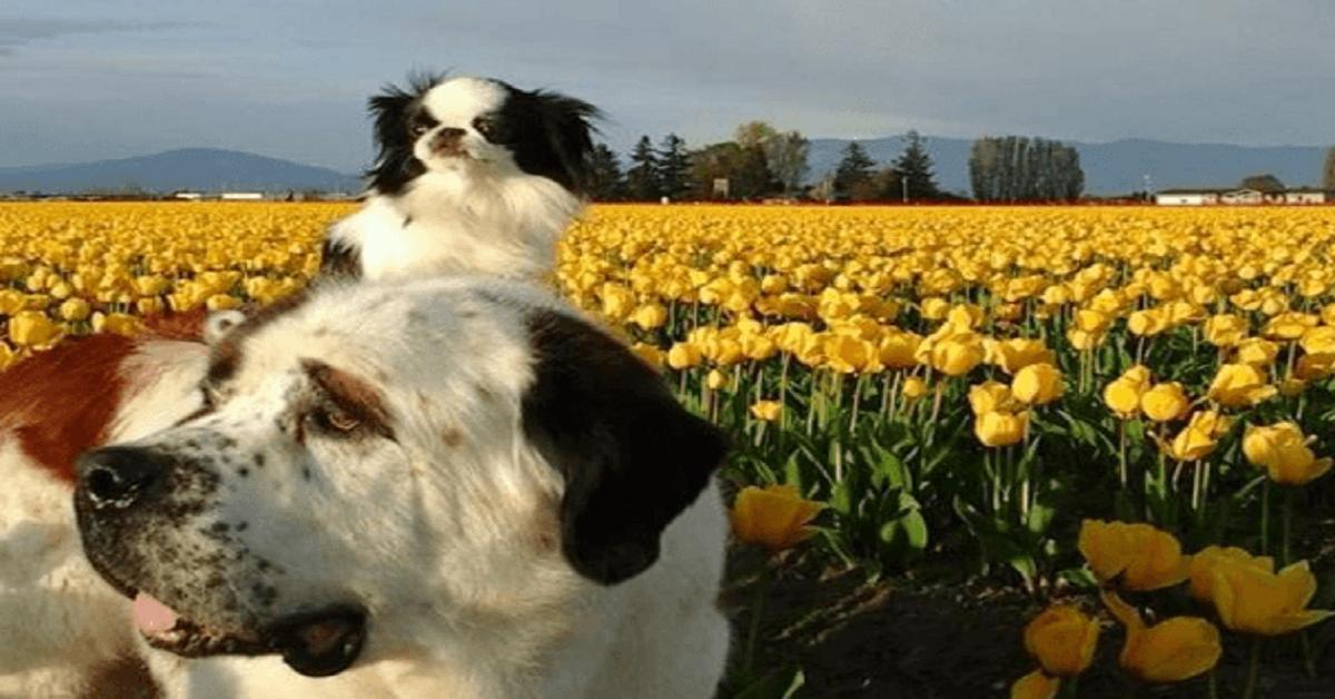 curiosidades-perrito-pequenoperro-gigante-amistad-toy