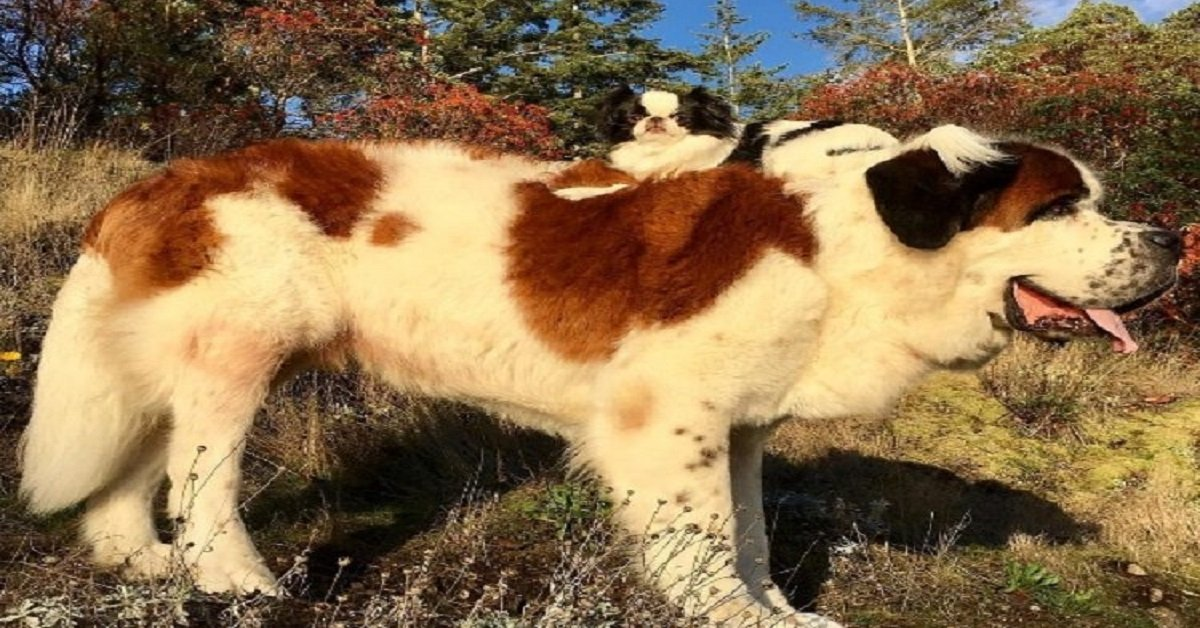 curiosities-dog-toy-giant-dog-friendshipdog