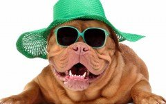 dog-fashion-fashion-dog-pet