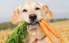 Healthy dog food for your friend