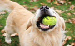The health benefits of playing with your dog