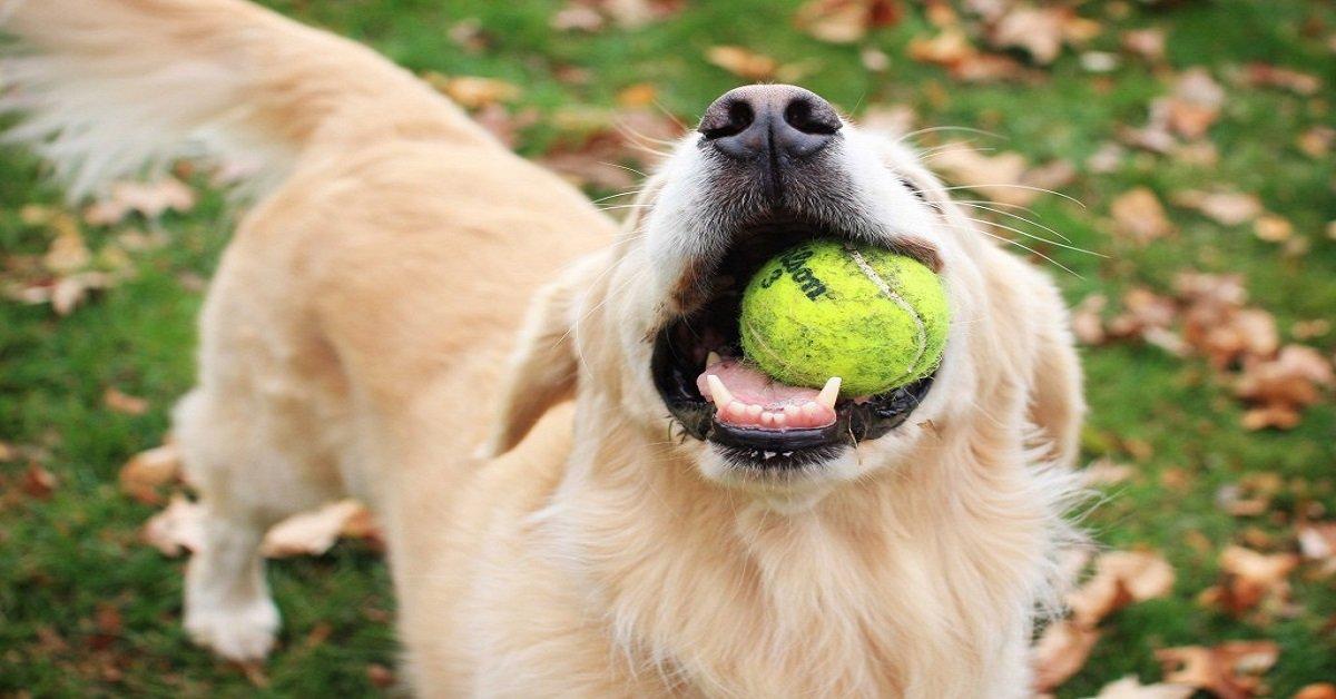 dog-friend-friendship-whit-dog-fun
