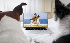 dog-news-dog-dogs-views-tv