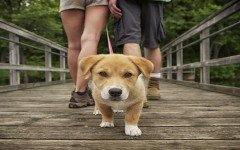 dog-walking-dog-breeds-pet-education