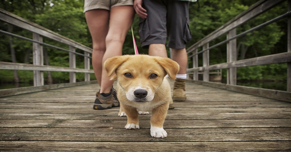 Correct Way To Walk A Dog