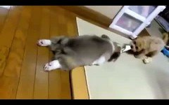 Video divertenti: la domenica spiegata da un cane