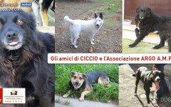 Argo AMPA: conosciamo l' Associazione per animali