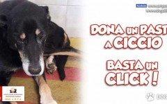 Argo AMPA: Adottiamo il cane CICCIO per un anno
