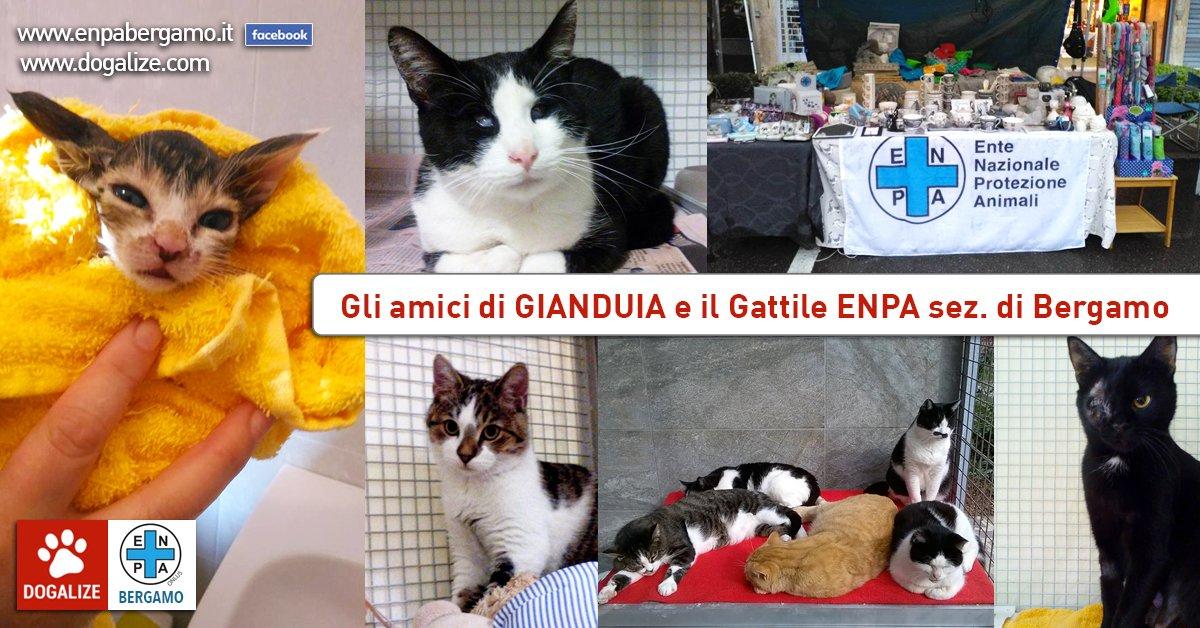 gattile-enpa-bergamo-aiutaci-dona-un-pasto-associazione