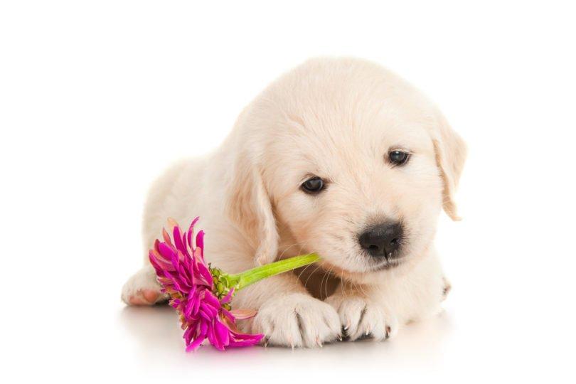 Nomi per cani femmine idee suggerimenti per il tuo cane for Nomi per tartarughe femmine