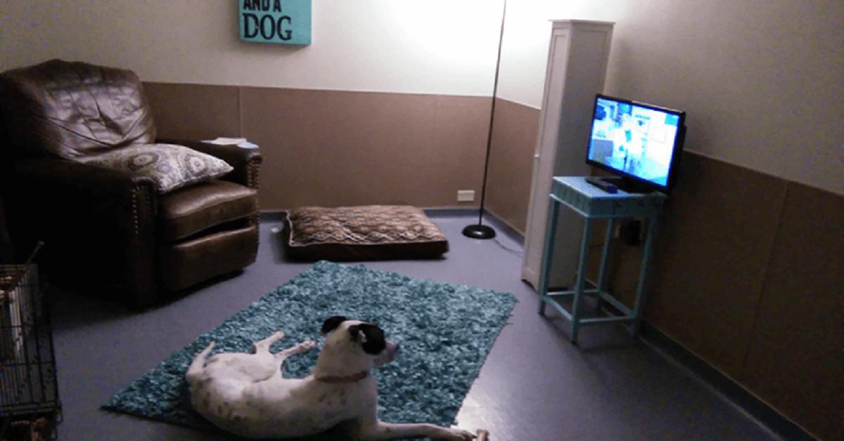 habitaciones-para-perros-en-refugio-adopciones-adopcion