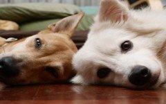 huracan-perros-gatos-abandonados-adoptadas-adopcion-animales-mascotas