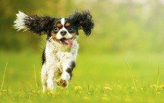 ley-proteccion-animal-argentina-carreras-perros-galgos