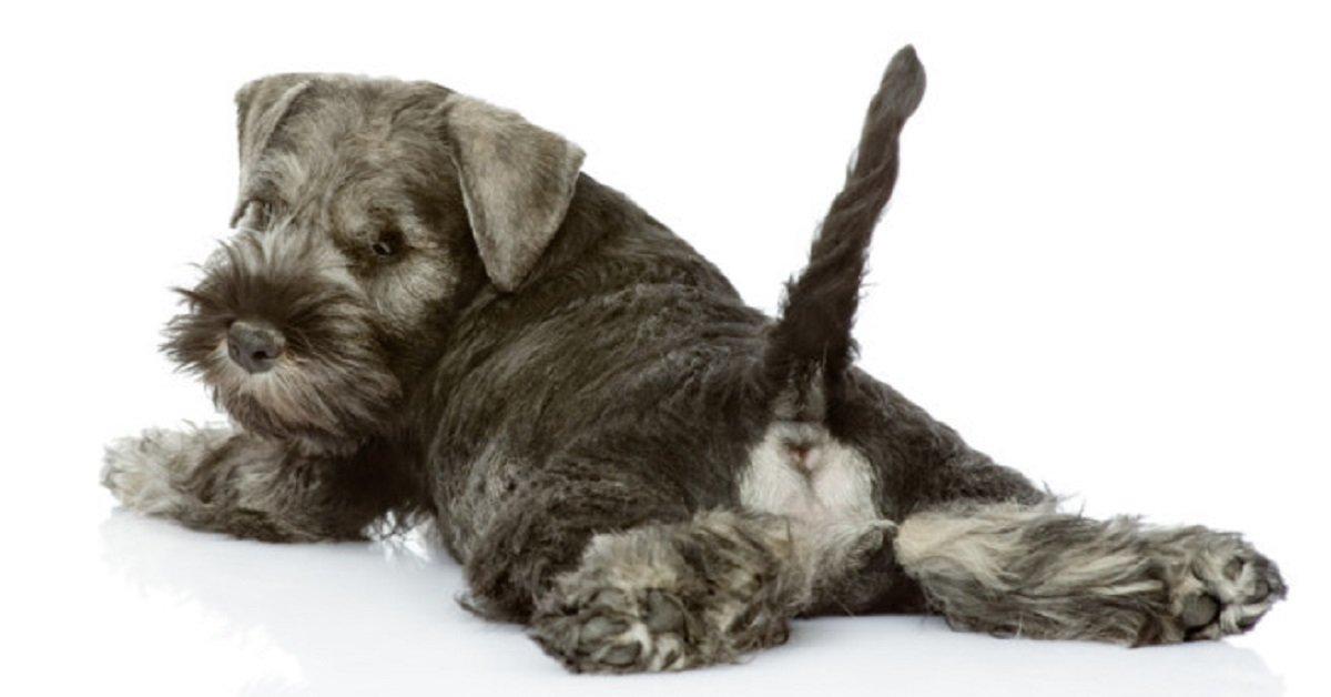 Maltrato animal: cortar la cola a tu mascota