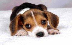 Vacanze con animali: Natale in ferie con il cane!