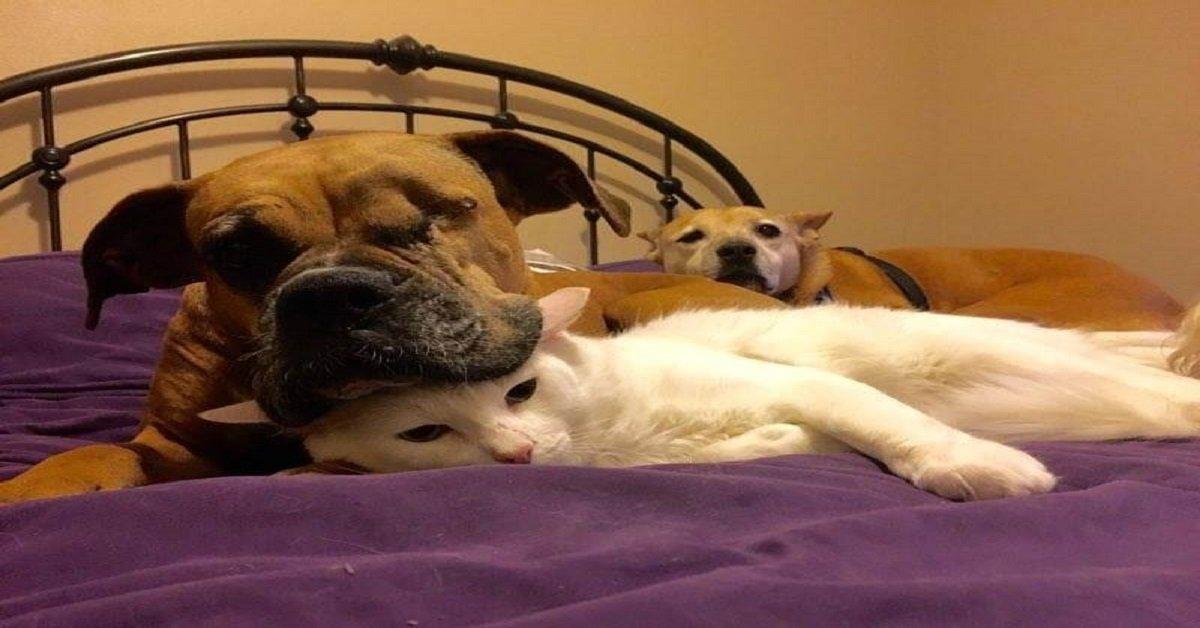 news-perruna-perra-de-raza-boxer-gato-descapacitad-amistad