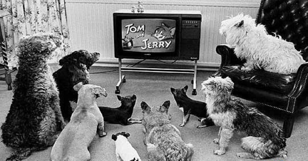 noticias-perrunas-cientificos-los-perros-ven-la-televicion-televicion