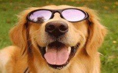 dog-grooming-dog-style