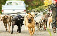 Educatore cinofilo: ci aiuta a gestire la relazione tra noi e il cane. Ecco come!
