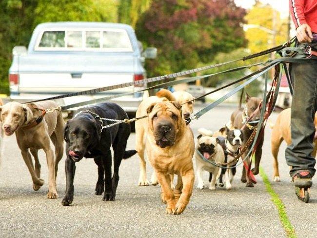 Socializzazione canina; come fanno amicizia i cani? Scopri con noi come socializzano i nostri amici a 4 zampe!