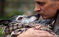 perro-de-raza-galgo-ultimo-saludo-al-animal