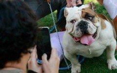 Foto di Cani: Quando anche Fido è un Fotomodello...e quando il tuo cellulare è pieno!