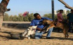 perros-callejeros-franja-de-gaza-perrera-said-al-ar