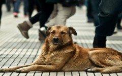 perros-callejeros-perros-abandonados-protteccion-animal-animales