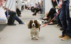 perros y gatos metro