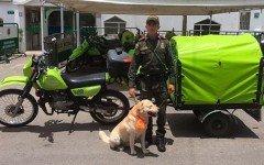 policia-ambulancia-para-los-animales-perros-perros-callejeros