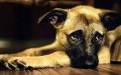 protectora-animal-maltrato-animal-perros-animales
