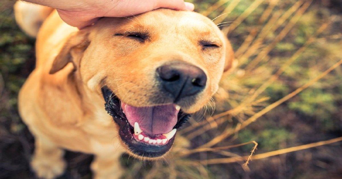 adoptar un perro en tu hogar