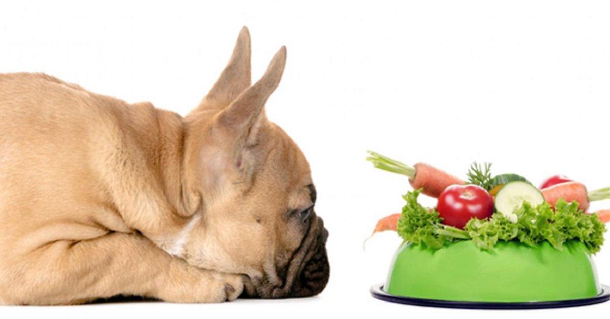 recetas-caseras-para-mascotas-arroz-y-verduras-como-alimento-para-perros