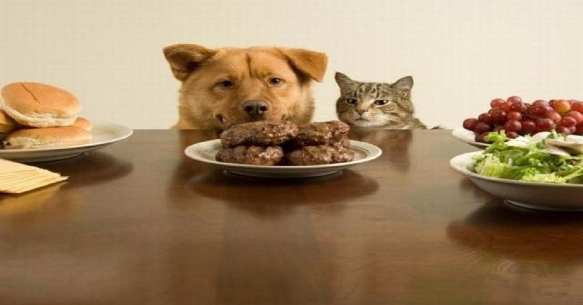 Homemade Dog Food Recipes For Puppies