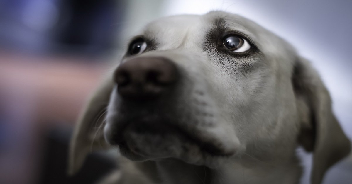 senales-de-alerta-de-tu-perro-cuidados-y-atencion-perro