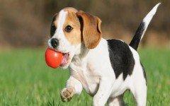 the-dogs-animal-animal-abuse-pet