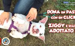 Adozione a distanza: Ziggy dell'associazione La Casa di Axel è stato adottato a distanza