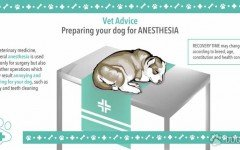 Anesthesia for Dog