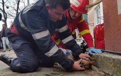 Pompiere salva un cane in Romania con massaggio cardiaco