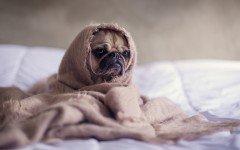 Enfermedades Caninas: sintomas y enfermedades comunes