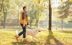 Educare il Cane Dogalize Addestramento cani